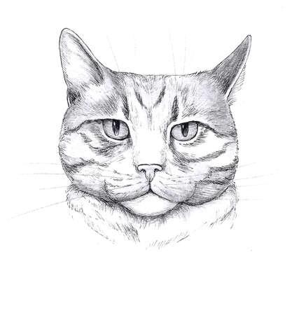 Graphic head of a cat 版權商用圖片
