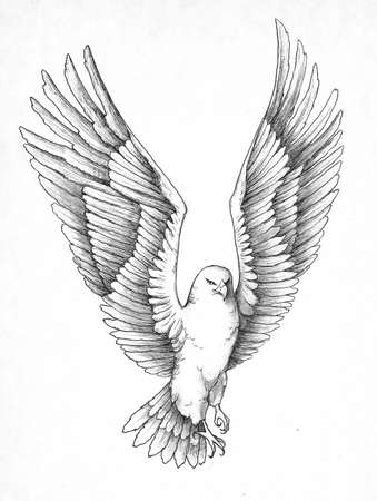 contour and tone of a flying eagle graphic