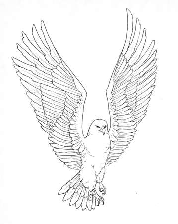 contour of a flying eagle graphic