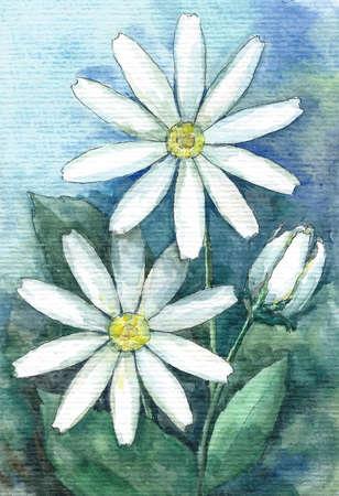 Garden chamomiles, blue background Watercolor illustration 版權商用圖片