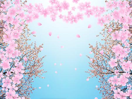 cherry blossom: Cherry