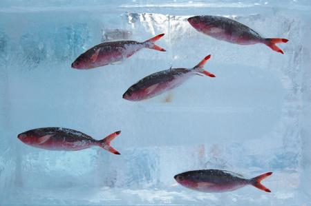 氷を魚します。 写真素材