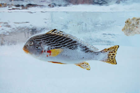fish on ice: Fish in ice