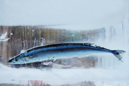 fish in ice: Ice and fish