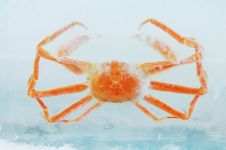 ice age: Crabs in ice