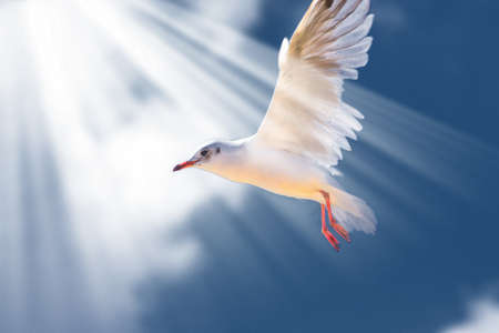 baptize: Seagull in the sky