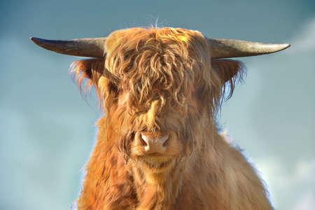 highlander: Highlander escoc�s contra un cielo azul