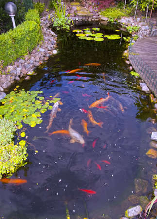 lagoas: Lago com peixes