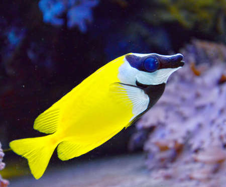 wildllife: Tropical fish Stock Photo