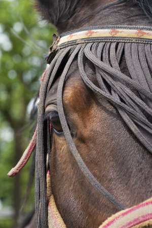 Horse close up Stock Photo - 18042525