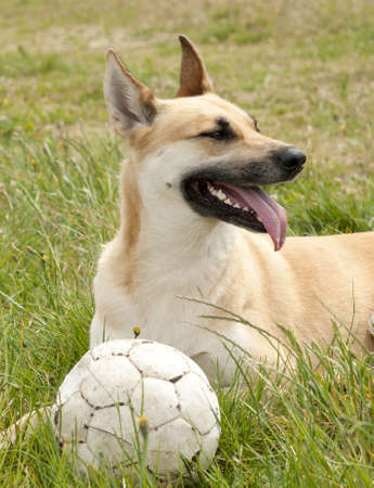 Dog with a ball Stock Photo - 18044130