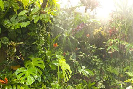borneo: Tropical rainforest