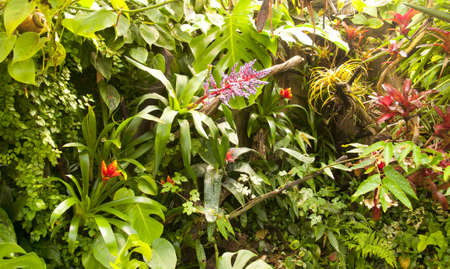 Tropical rainforest photo