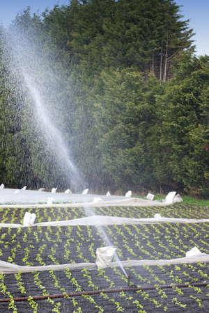pivotal: Irrigation Stock Photo