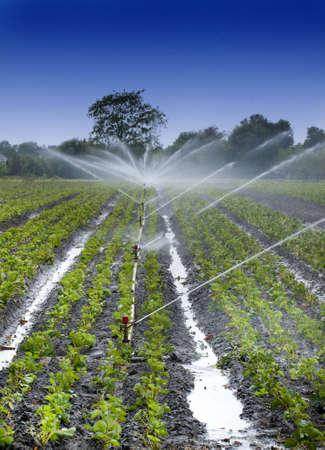 irrigating: Irrigation Stock Photo