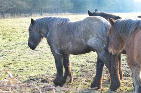 contemporaneous: Herd of Horse lives by on a farm