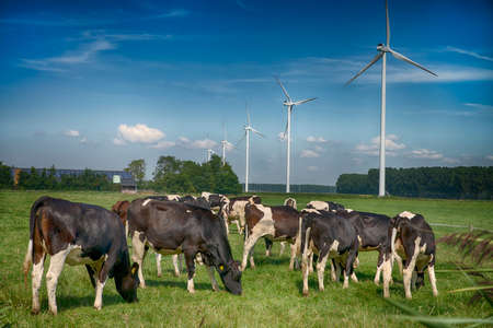 solarenergy: typical modern dutch landscape with a farm with solarenergy and windturbines Stock Photo