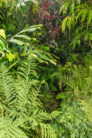 rain and sunshine in tropical forest
