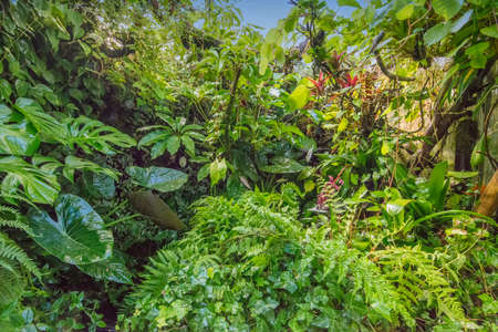 tropical rain forest with bright light in the background Stock Photo