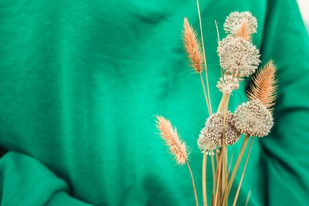 dry grass on a green background close-up Banco de Imagens