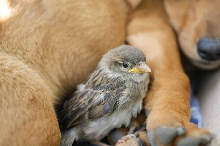 Sparrow is sitting near the dog. dog and bird. friendship between animals.