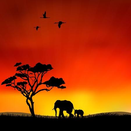 zvířata: Obrázek ukazuje slonů ve volné přírodě Ilustrace