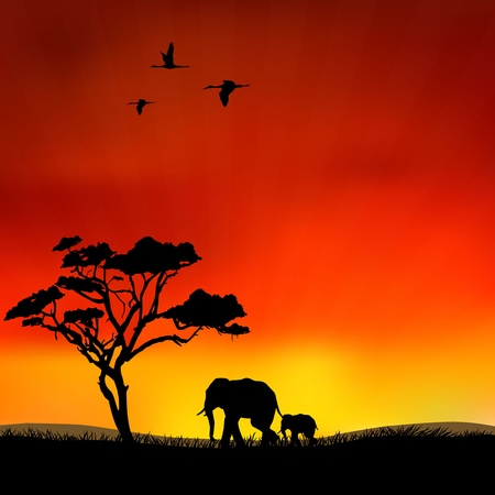 The figure shows the elephants in the wild Stock Vector - 12232978