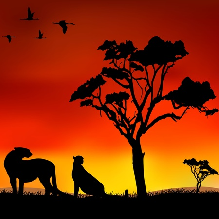 The figure shows the wild animals in the wild