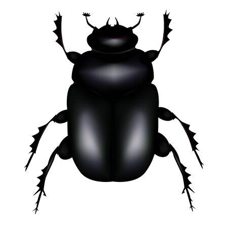 scarab:  Scarab beetle Illustration