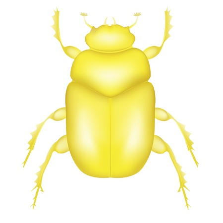 scarab: Gold Scarab Beetle