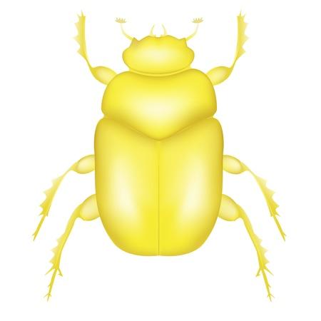 scarabeo: Oro Scarab Beetle