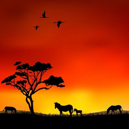 Zebras in der Savanne bei Sonnenuntergang Illustration