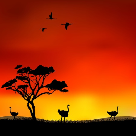 Ostriches in the wild Vector