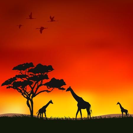 Rysunek przedstawia żyrafy na czerwonym tle