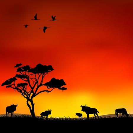 Wildebeest in the wild Vector