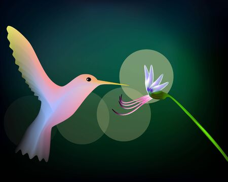 Colibri Illustration