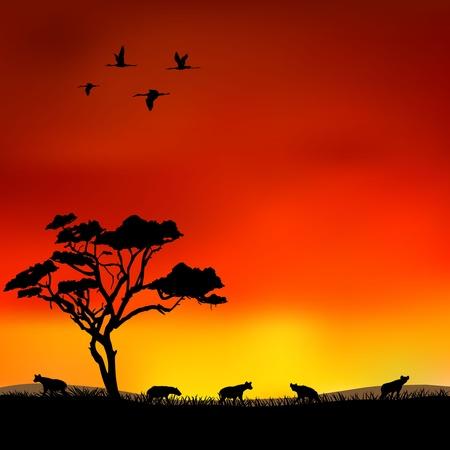 hyena Illustration