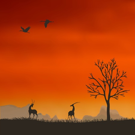 Antelope in the background of the sunset Stock Vector - 14843506