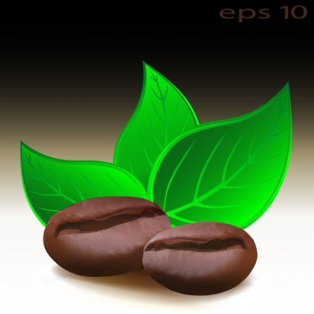 green coffee beans: Coffee