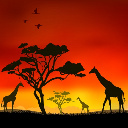 The giraffes on a red background