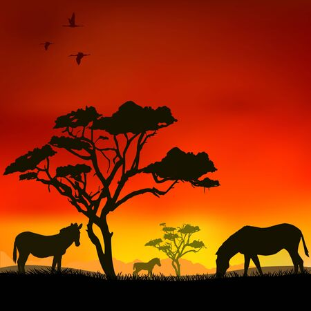 The zebras in the savanna at sunset  Vector
