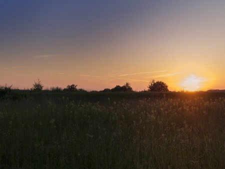 summer meadow at sunset Stock Photo - 20720357