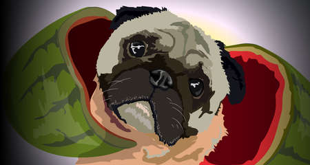 Pug looks out of the watermelon Illustration