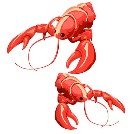 Vector illustration of boiled crayfish