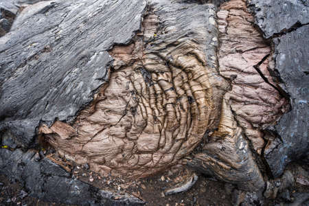 Close up of black lava swirl in Hawaii Volcanoes National Park.