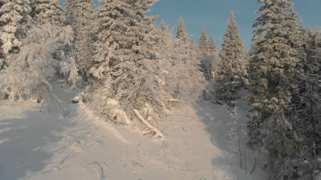 Winters snow-covered forest. The camera flies between the trees covered in snow. Christmas trees in the winter forest Фото со стока