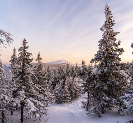 Winter landscape - frosty trees in snowy forest in the sunny morning. Tranquil winter nature in sunlight.