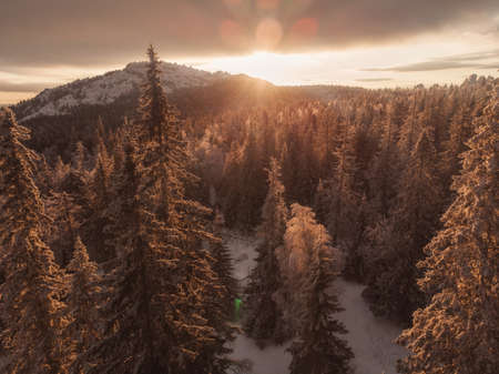 Sun rays in winter forest.