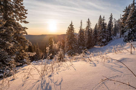 Winter landscape - frosty trees in snowy forest in the sunny morning. Tranquil winter nature in sunlight Imagens
