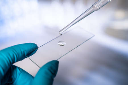 A scientist works in a modern laboratory. Apply a drop of liquid to a glass slide Imagens